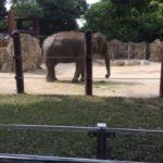 象と私と充電